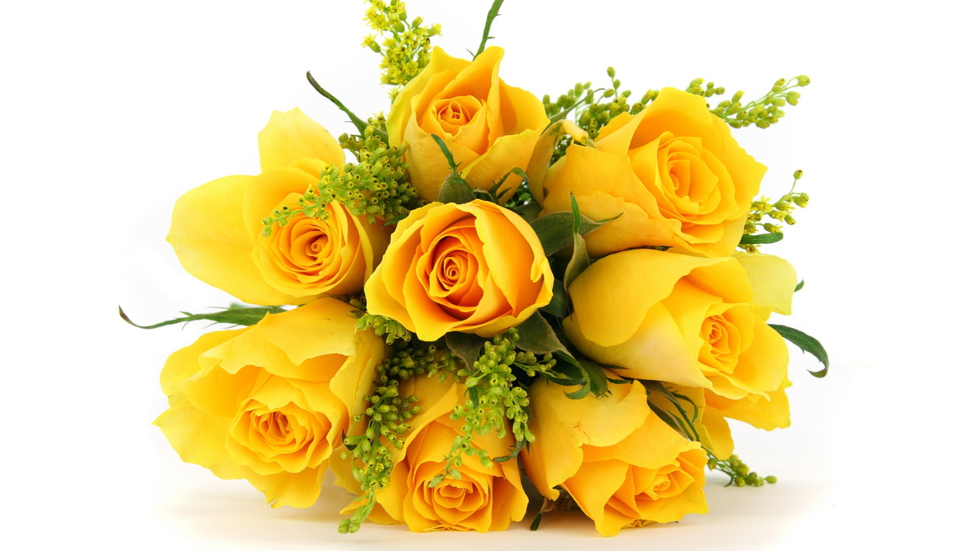 Pictures Of Yellow Rose