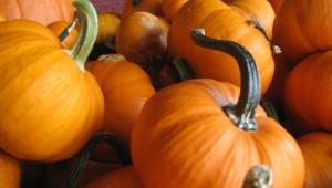 Pumpkin Hd Desktop
