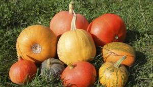 Pumpkin High Quality Wallpapers