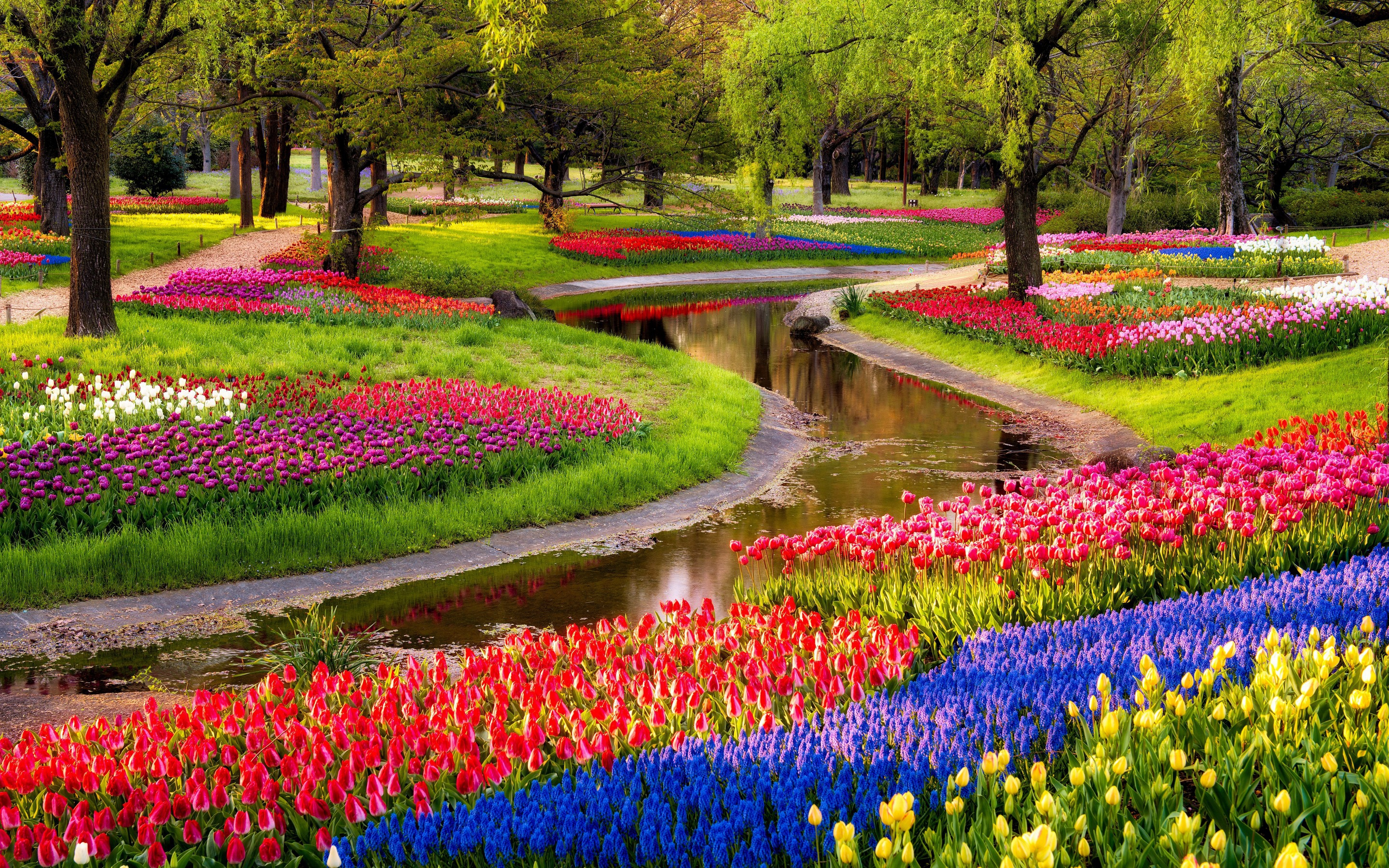 River Of Flowers Keukenhof Computer Wallpaper