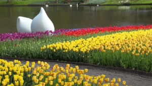 River Of Flowers Keukenhof Desktop