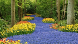 River Of Flowers Keukenhof Hd Desktop