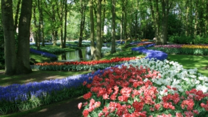 River Of Flowers Keukenhof High Definition