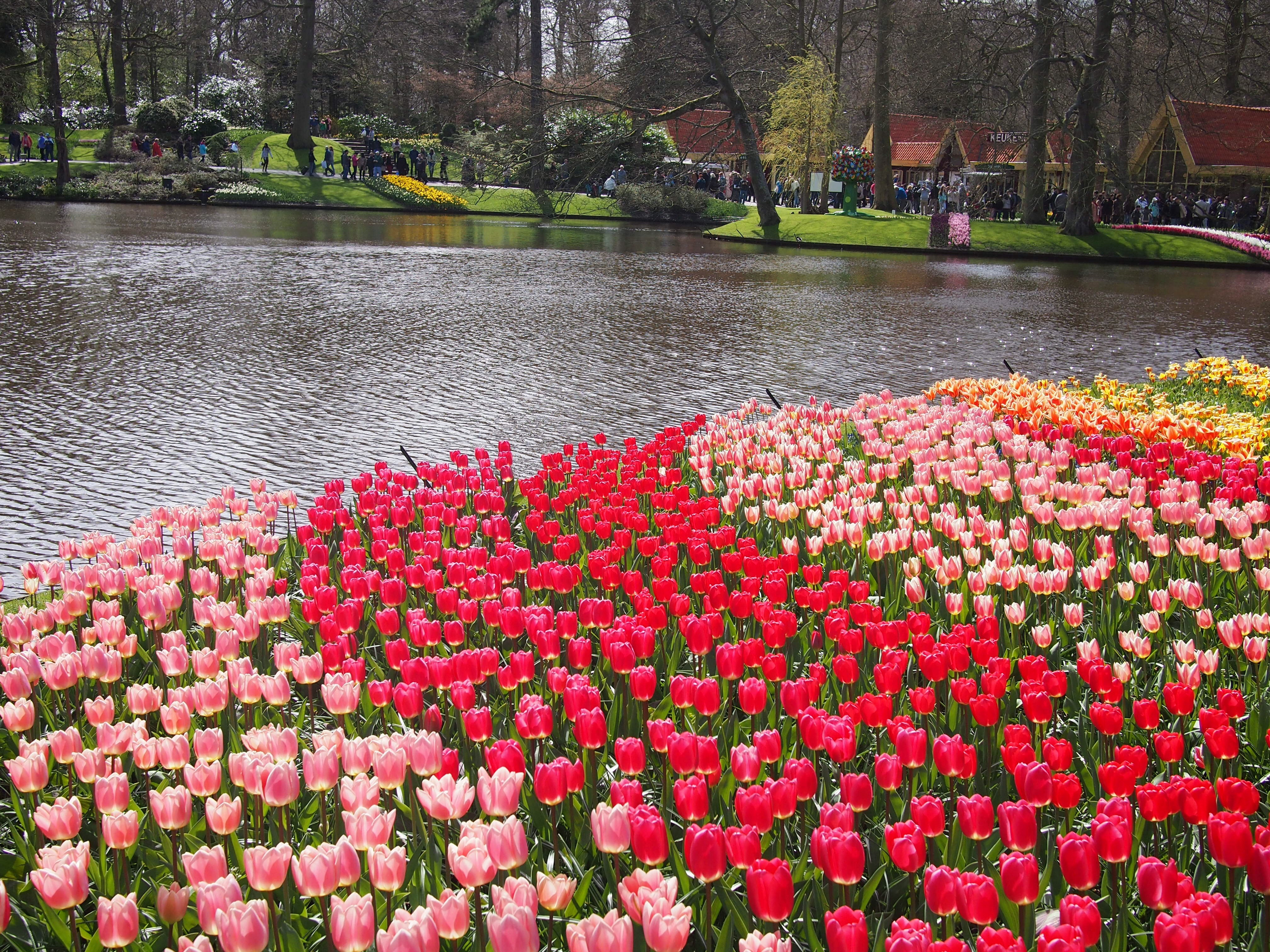 River Of Flowers Keukenhof High Quality Wallpapers