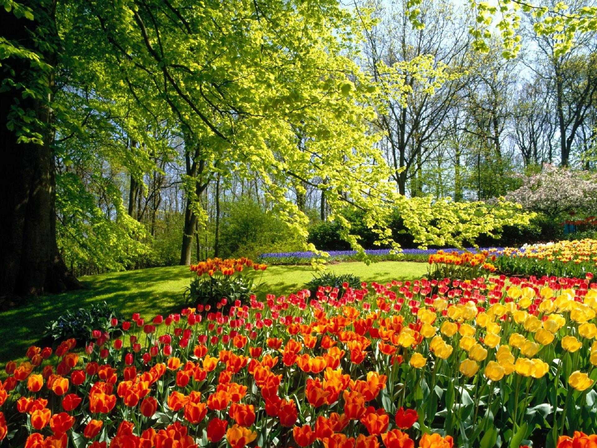 River Of Flowers Keukenhof Photos