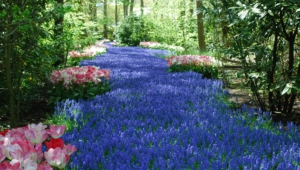 River Of Flowers Keukenhof Pictures