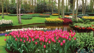 River Of Flowers Keukenhof Wallpaper