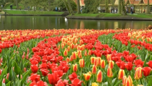 River Of Flowers Keukenhof Wallpapers
