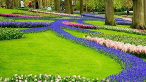 River Of Flowers Keukenhof Wallpapers Hd