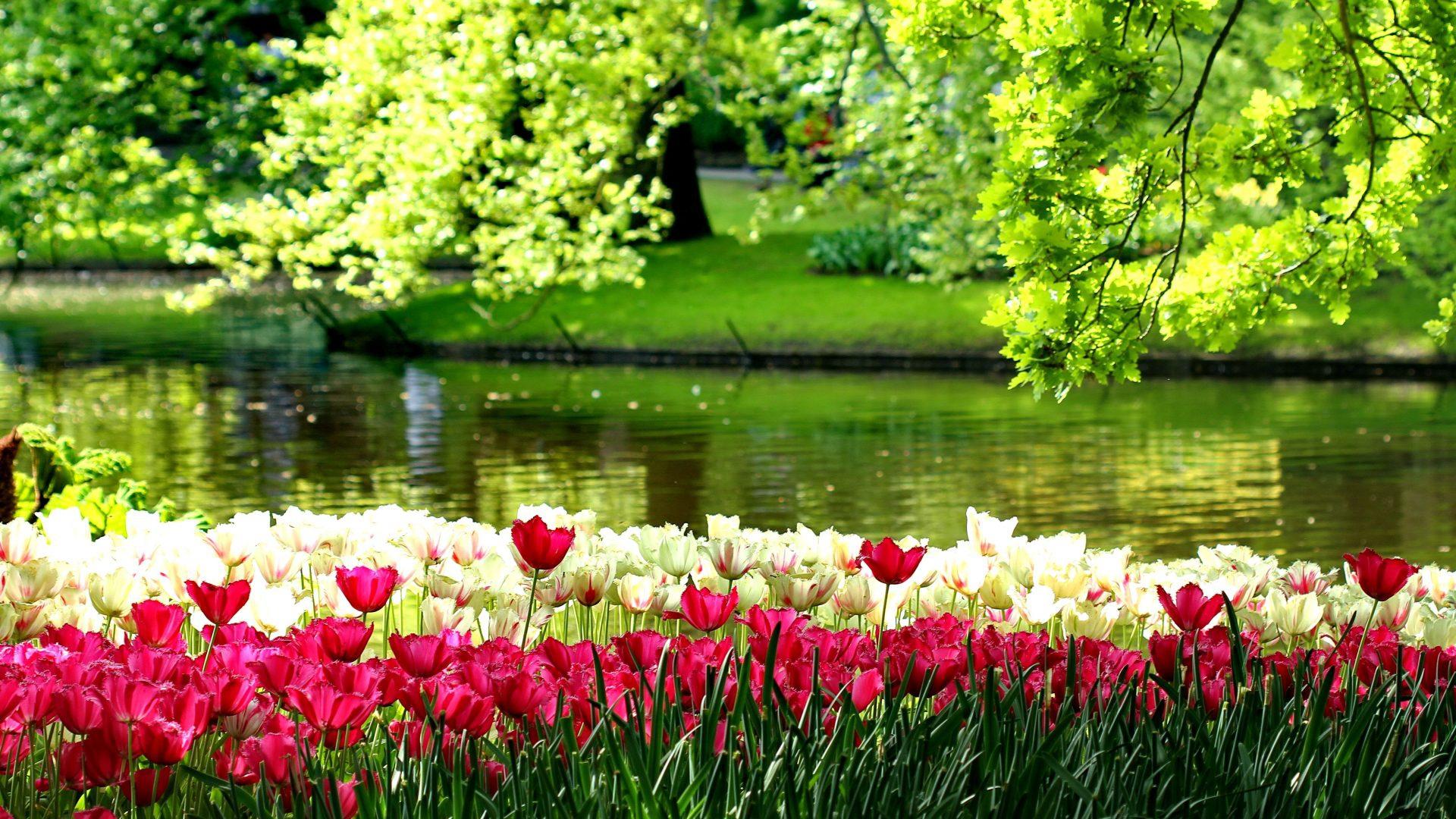 River Of Flowers Keukenhof Widescreen