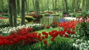 River Of Flowers Keukenhof For Desktop
