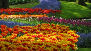 River Of Flowers Keukenhof Full Hd