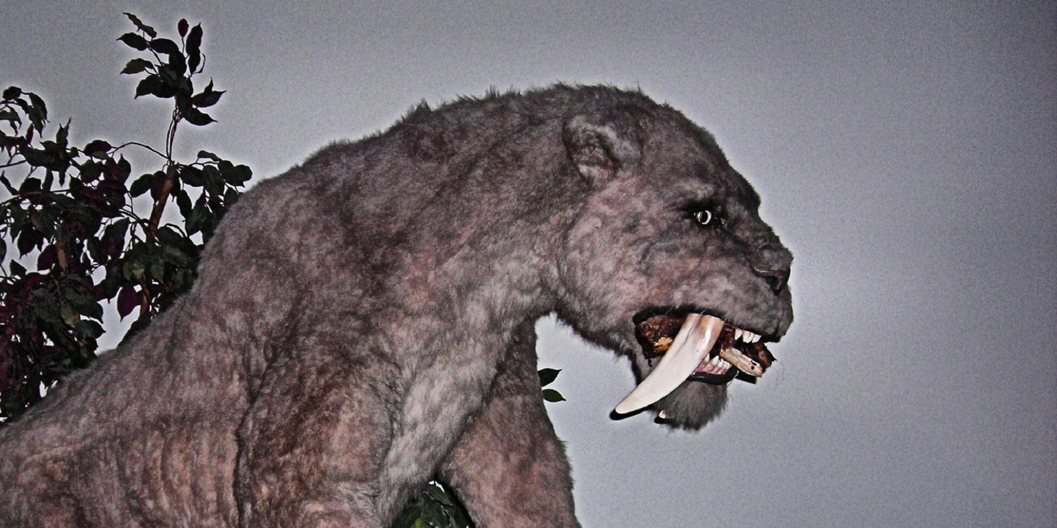 Sabre Toothed Tiger Images