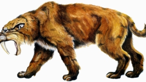 Sabre Toothed Tiger Wallpaper