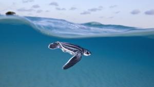 Sea Turtle 4k