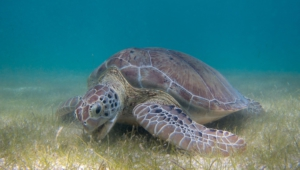 Sea Turtle High Definition Wallpapers