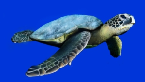 Sea Turtle Images