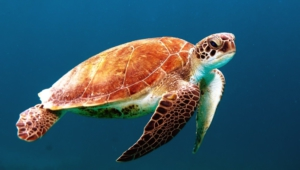 Sea Turtle Pictures