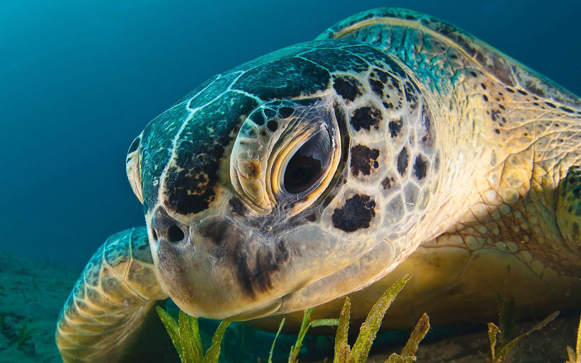 Sea Turtle Widescreen