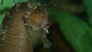 Seahorse High Definition Wallpapers