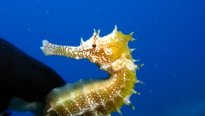Seahorse Images
