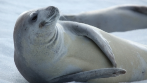 Seal Desktop