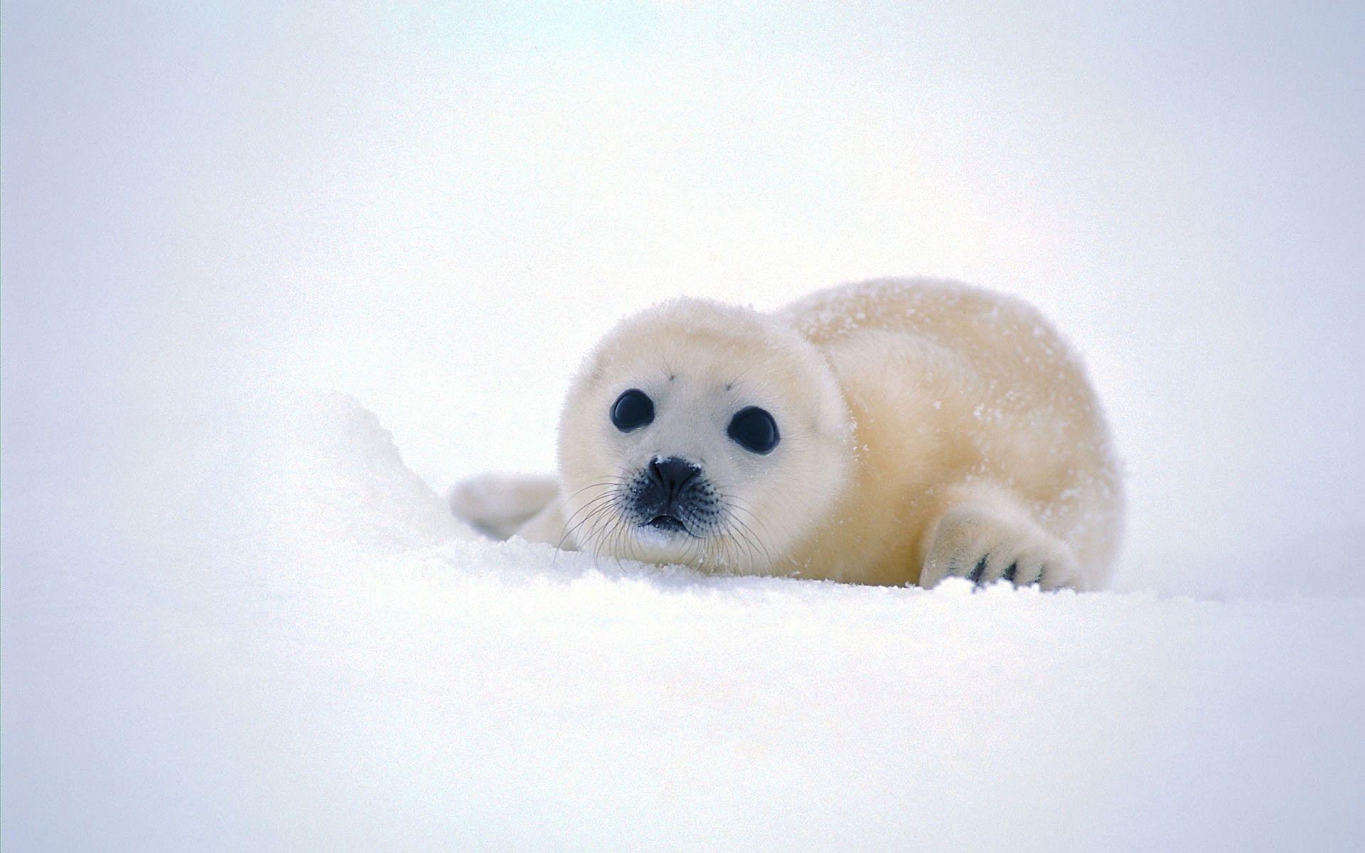 Seal Desktop Images