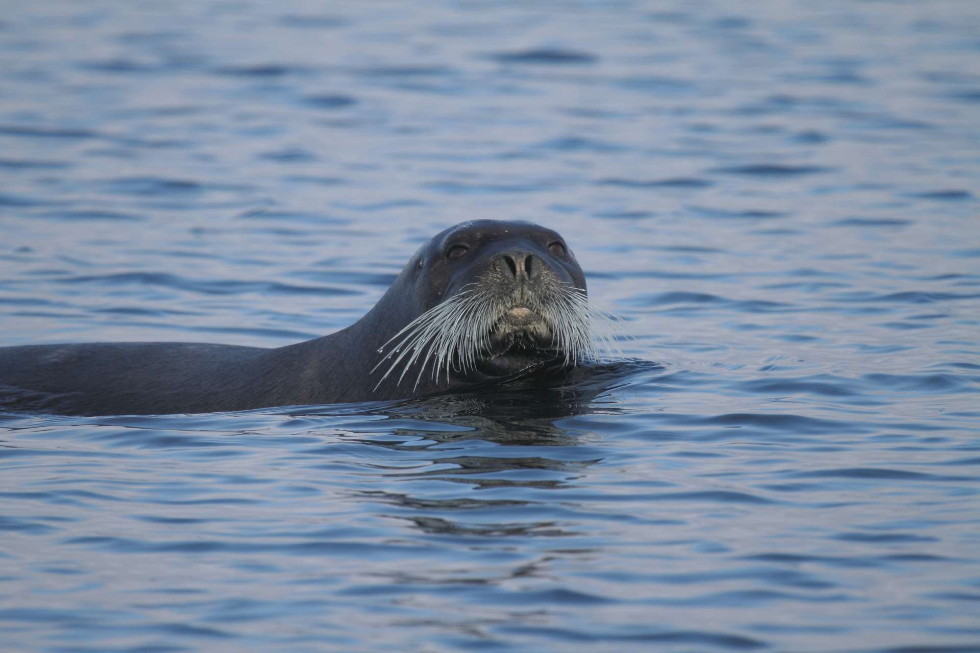 Seal Free Hd Wallpapers