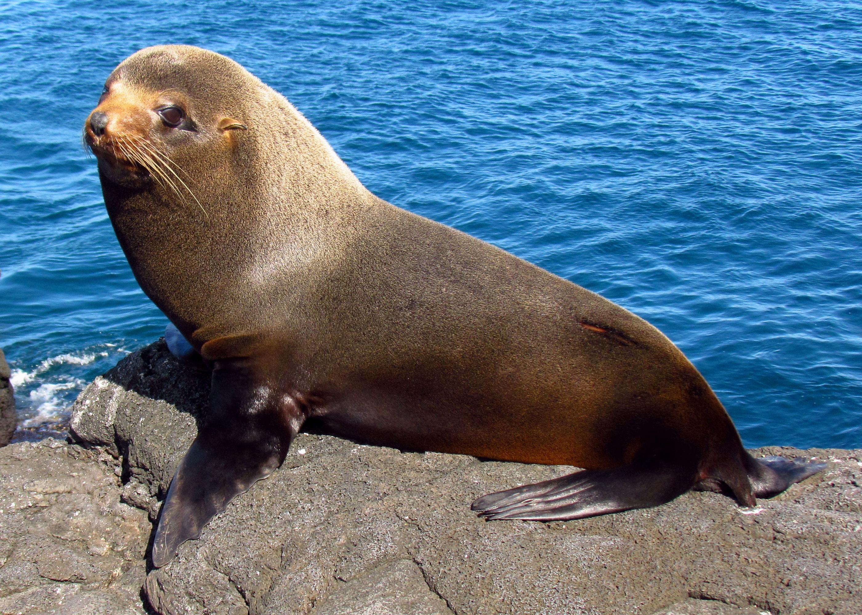 Seal Hd Desktop