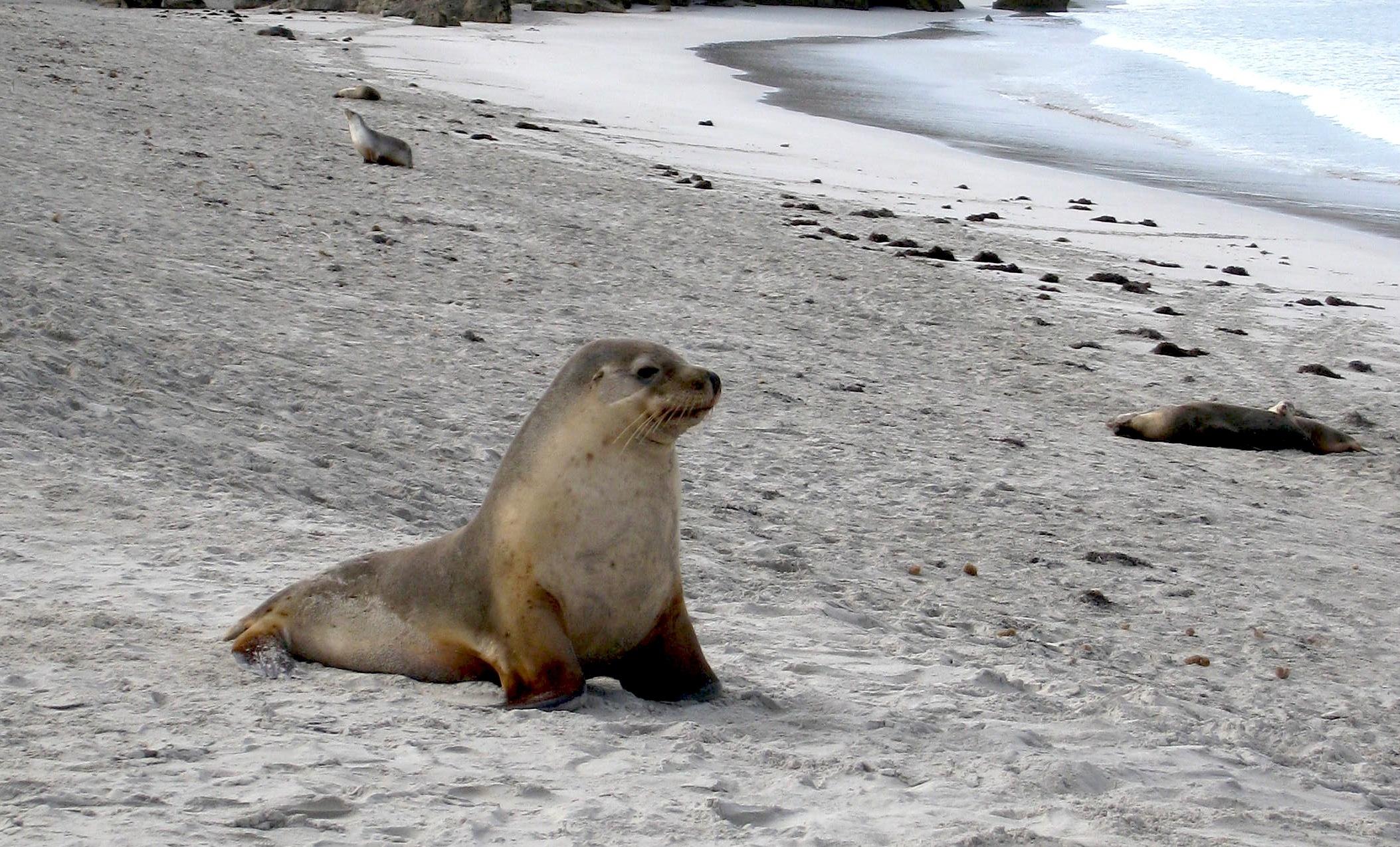 Seal Hd Pics