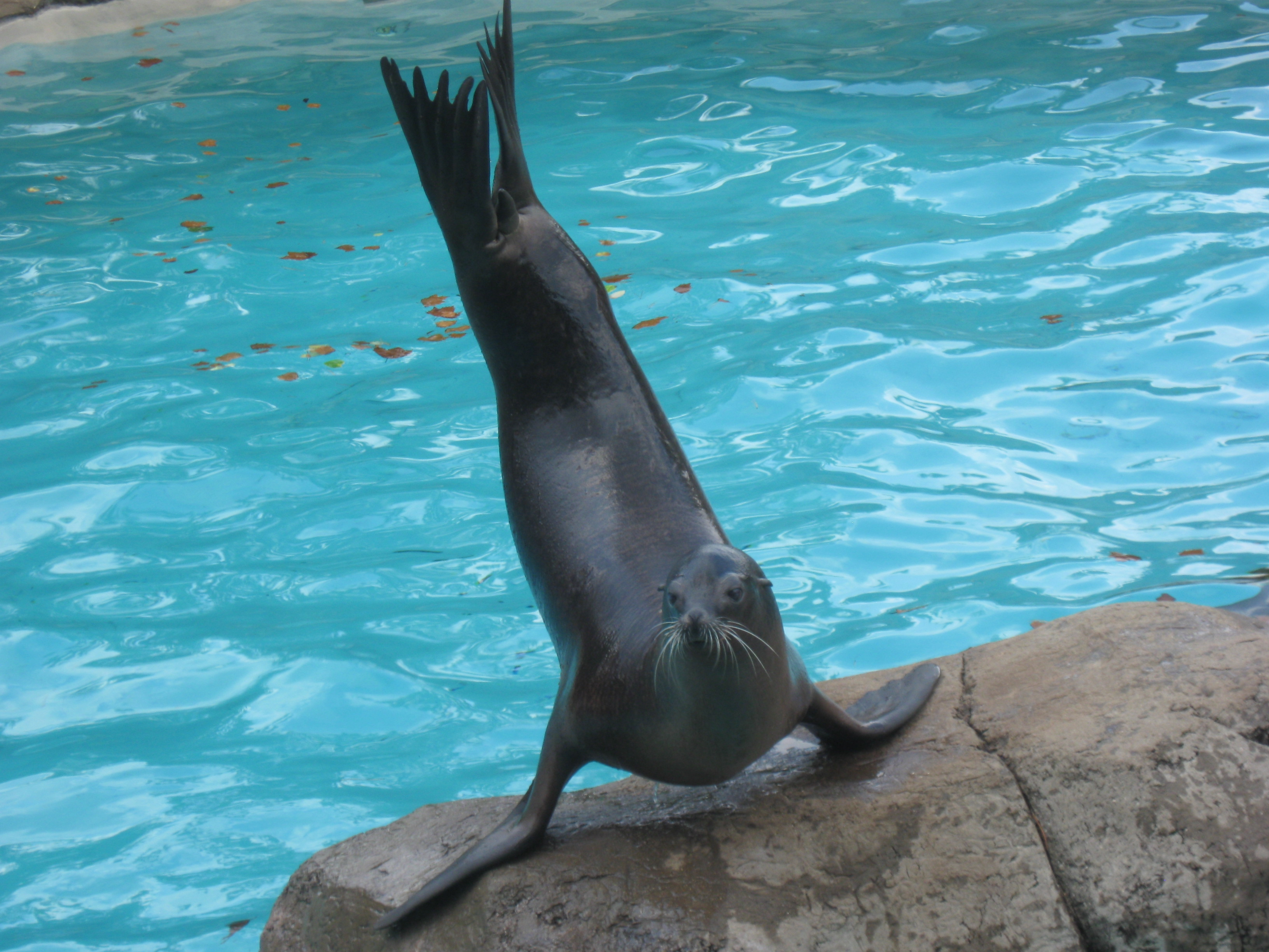 Seal Free Images