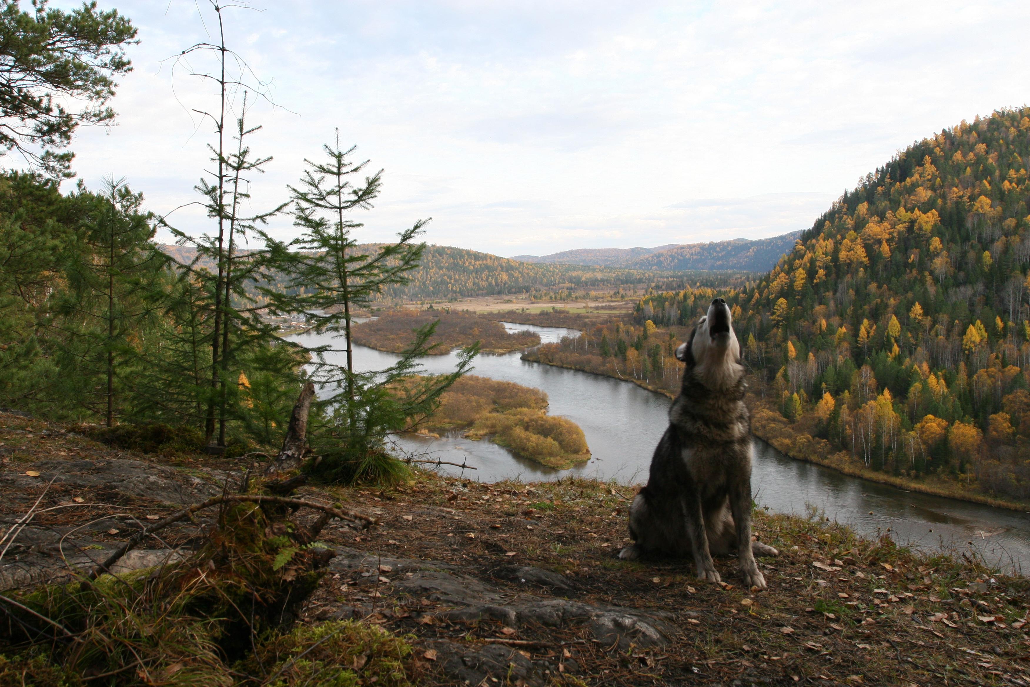 Siberian Photos