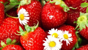 Strawberry Pics