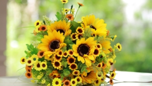 Sunflower High Quality Wallpapers