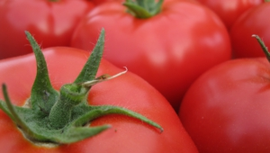 Tomato Free Hd Wallpapers