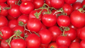 Tomato Hd Wallpaper