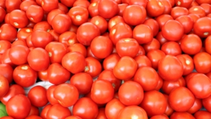 Tomato For Desktop Background
