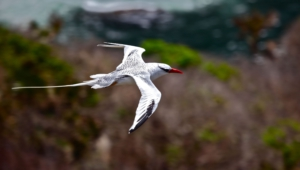 Tropicbird High Definition Wallpapers