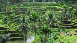 Ubud Background