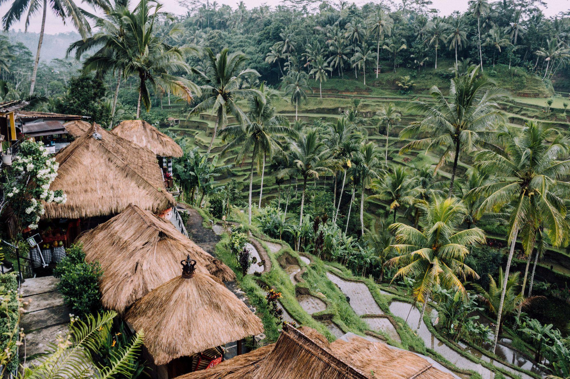 Ubud Hd Background