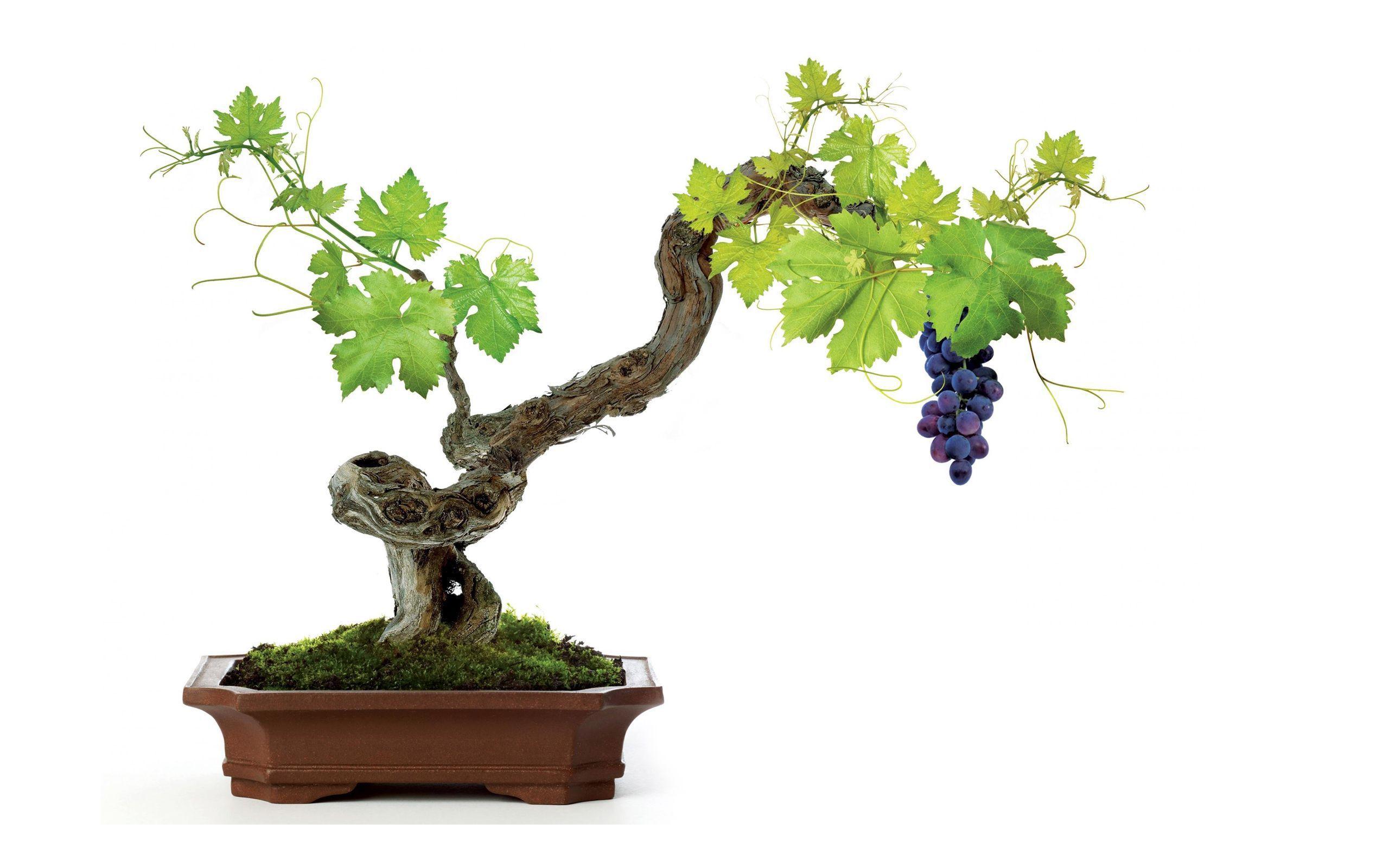 Vine Leaf Wallpaper