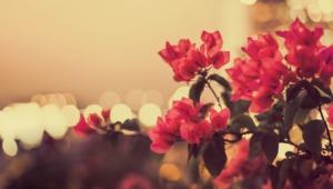 Vintage Flowers Desktop