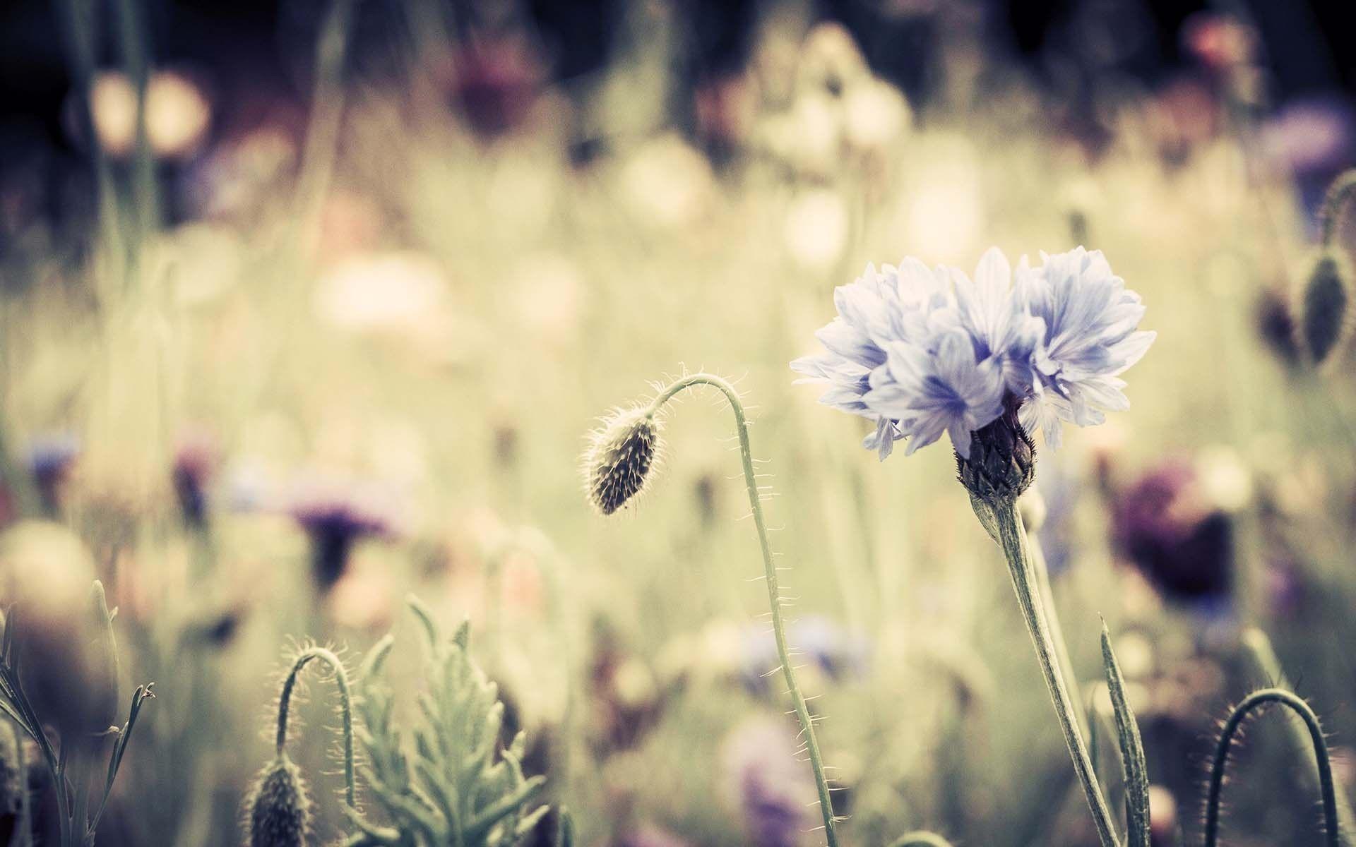 Vintage Flowers Hd Background