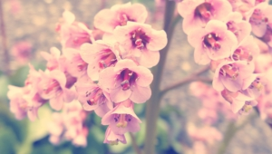 Vintage Flowers High Definition Wallpapers