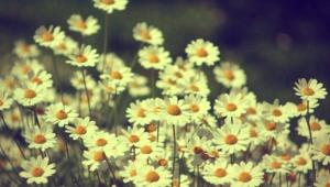 Vintage Flowers Photos