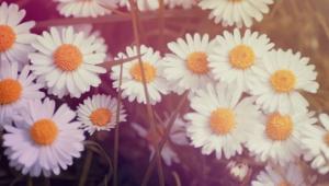 Vintage Flowers Wallpaper For Laptop
