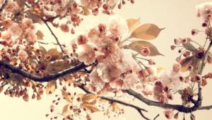 Vintage Flowers Wallpapers Hd