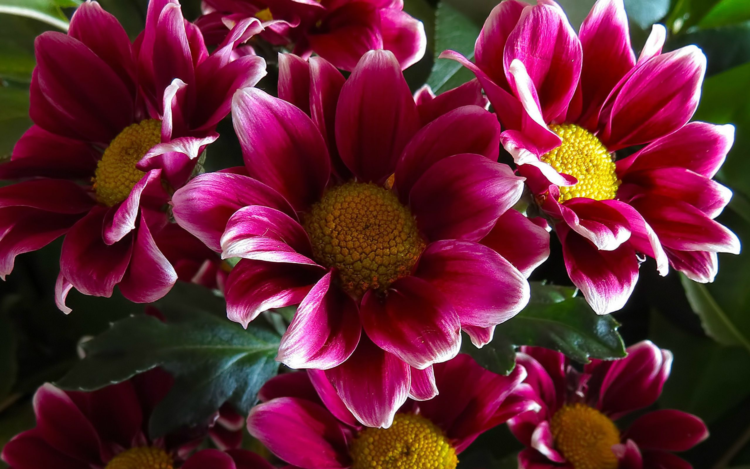 Vintage Flowers Widescreen
