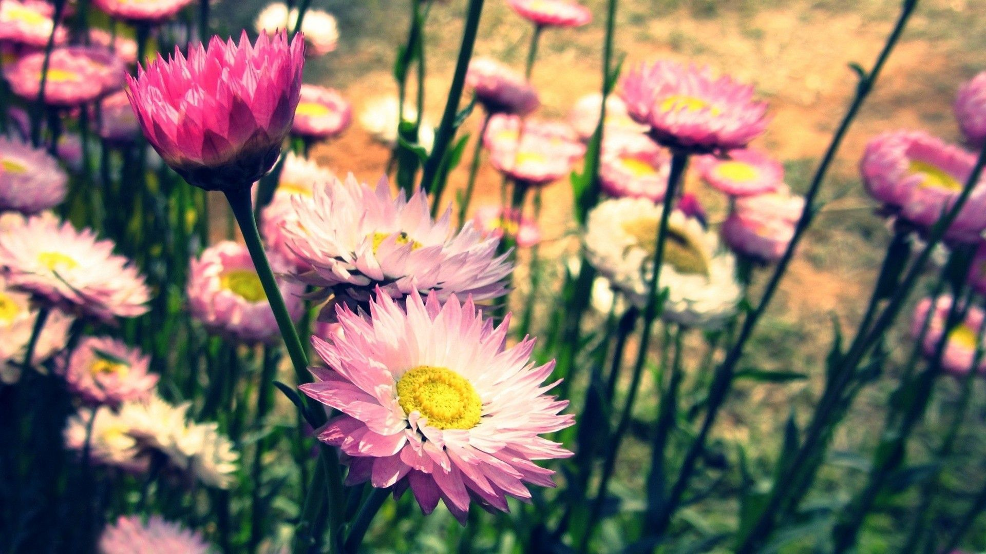 Vintage Flowers For Desktop Background