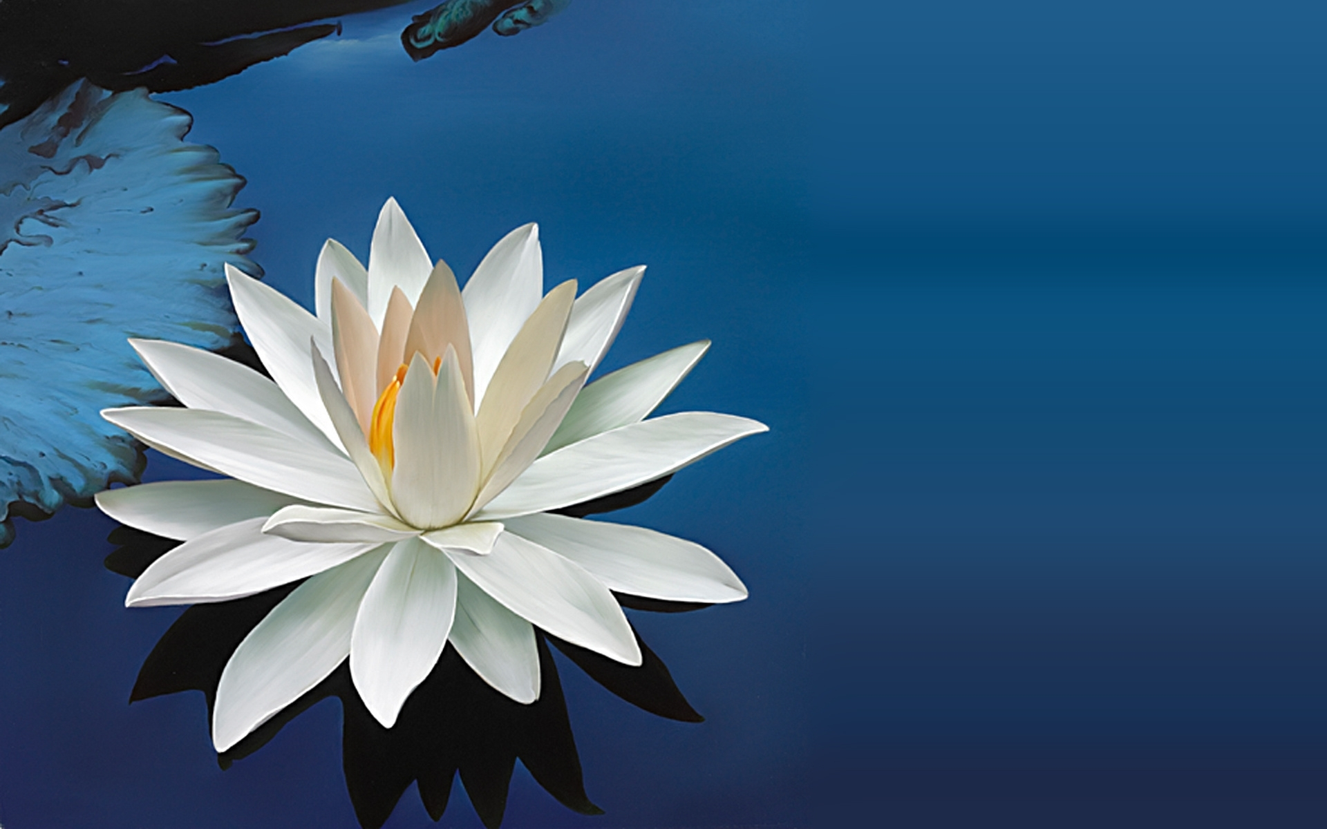 Water Lily Hd Pics